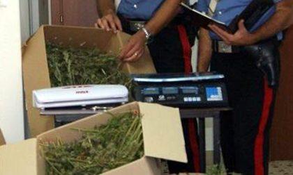 Traffico di droga 2.0: la marijuana a Campi Bisenzio ora la porta... il corriere