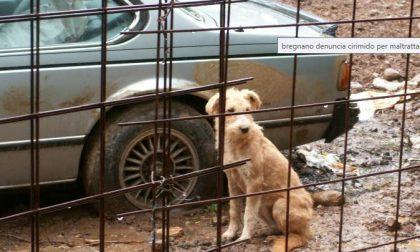 Maltrattava due cani a Sesto: denunciato dai Carabinieri forestali
