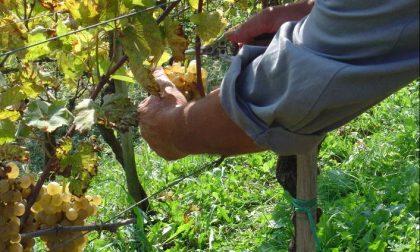 Montespertoli proporrà la sua candidatura come Capitale Italiana del Vino