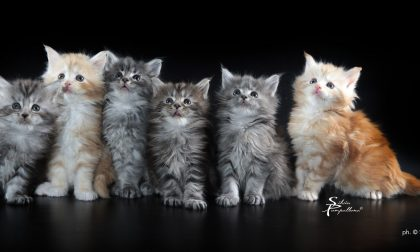 All'Estraforum di Prato arrivano i felini più straordinari del pianeta