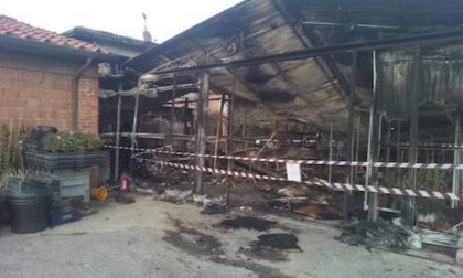 Incendio in una attività di floricoltura a Pieve a Nievole