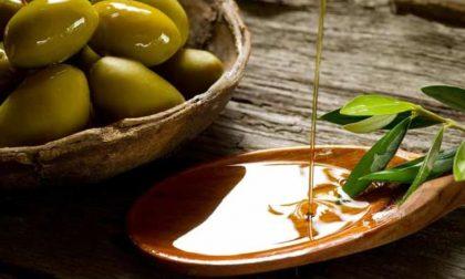Olio, in Toscana calo nella produzione del 30 per cento