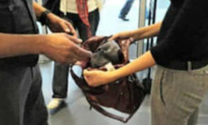 Taccheggio: arrestata per tentato furto aggravato