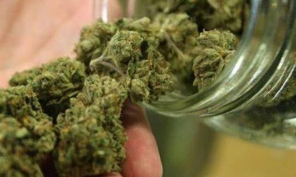 La nonna ospita in casa il nipote 17enne e scopre che nell'armadio coltiva cannabis: denunciato
