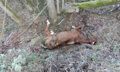 Cavallo cade in un fosso, salvato dai Vigili del fuoco