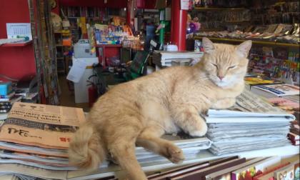 Quando il Gatto Nando conquistò giornali e tv