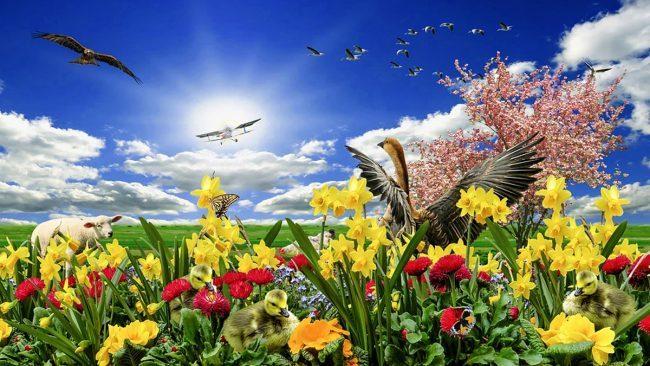 Equinozio di primavera 2019: la primavera è già arrivata oggi