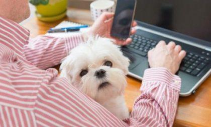 """Oggi è la """"Giornata del cane in ufficio"""""""