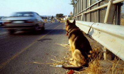 """Abbandono animali: """"Il Comune faccia una campagna di sensibilizzazione contro questo fenomeno"""""""