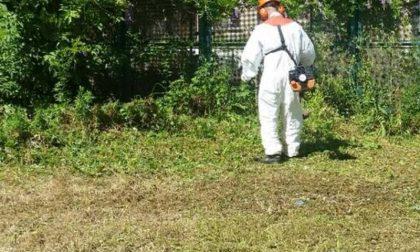 Taglio dell'erba, lunedì prossimo inizia la pulizia