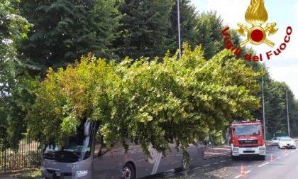Albero cade su un pullman a Firenze