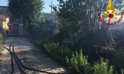 A fuoco 5mila metriquadri di oliveta e vegetazione