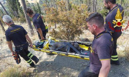 Cane colto da malore sul Monte Ferrato, soccorso dai Vigili del fuoco di Prato