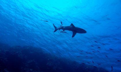 Avvistato squalo vicino alla spiaggia