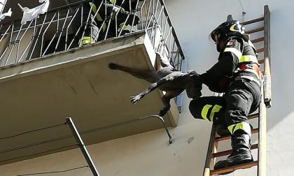 Cane rimane appeso ad una terrazza: ferito ad una zampa FOTO