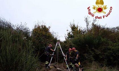 Cane rimane incastrato in un pozzo in Calvana: salvato dai vigili del fuoco