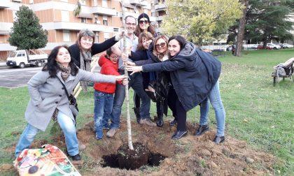 Civiche Insieme pianta due nuovi alberi a Poggibonsi