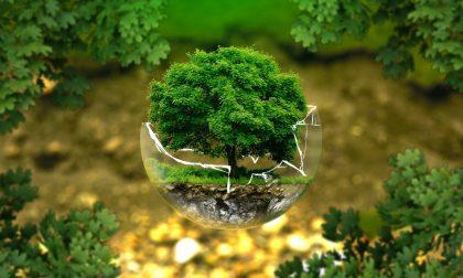 Festa dell'albero. L'iniziativa di Civiche Insieme