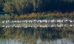 Al Lago di Peretola invece di Babbo Natale sono atterrati i fenicotteri