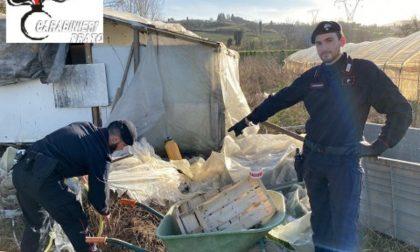 Blitz in un'azienda agricola: sfruttamento della manodopera cinese
