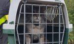 Tigrotto, il gattino che non riesce a scendere dal cipresso