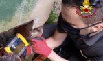 Gatto soccorso nel giardino dell'Università – GUARDA IL VIDEO