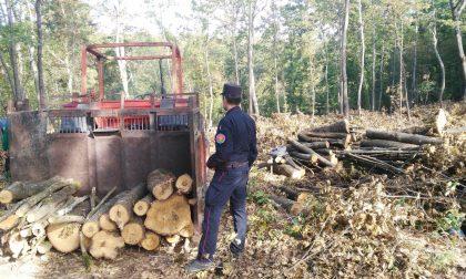 Scoperto taglio di bosco tutelato: denunciata una ditta