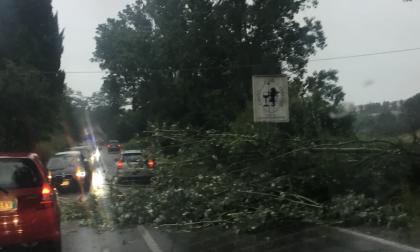 Via Maremmana: sono caduti grandi rami di albero