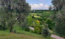 Agricoltura a prova di ambiente: in arrivo bandi per 20 milioni di euro dalla Regione
