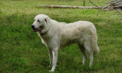 Calenzano: cani lasciati in stato di abbandono