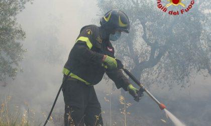 Incendio in un'oliveta: danneggiate 70 piante – LE FOTO