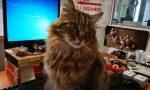 Biagio, il gatto mascotte del centro storico che ama stare in Comune – LE FOTO