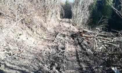 Scoperta pista forestale abusiva: elevate sanzioni
