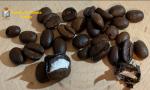 Chicchi di caffè alla cocaina per un ignaro tabaccaio di Firenze: la scoperta della Guardia di Finanza del Gruppo Malpensa VIDEO