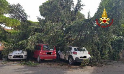 Grosso albero cade sopra tre auto GUARDA L E FOTO