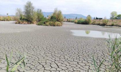 San Donnino,  bacino prosciugato e morìa di pesci: la segnalazione – GUARDA LE FOTO
