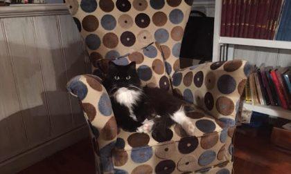 Giornata mondiale del gatto, un appello per abbassare l'Iva