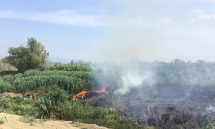 Incendio in corso a Signa sull'alveo del fiume Bisenzio: sul posto i vigili del fuoco – GUARDA LE FOTO