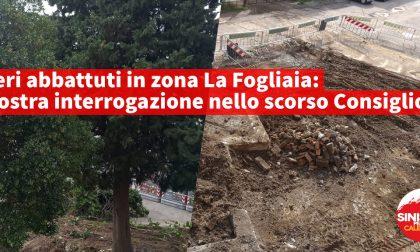 Alberi abbattuti nella zona de La Foglia, interrogazione della Sinistra per Calenzano
