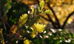 Calenzano: 350 nuovi alberi per tre nuovi boschi urbani