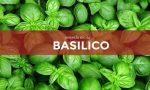 Tutti ortisti: in edicola oggi con Bisenziosette i semi di basilico