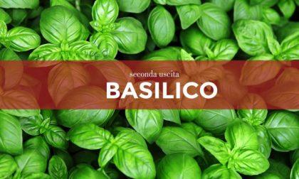 Tutti ortisti: in edicola venerdì con Bisenziosette i semi di basilico