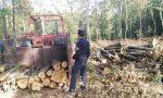 Trovati 100 alberi tagliati illegalmente a Barberino del Mugello