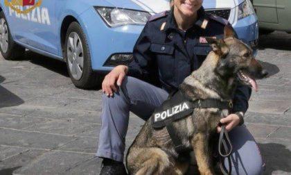 Cane poliziotto a passeggio fiuta droga in una monovolume parcheggiata in strada: la Polizia di Stato scopre 5 kg di hashish nel cofano del mezzo e arresta l'automobilista