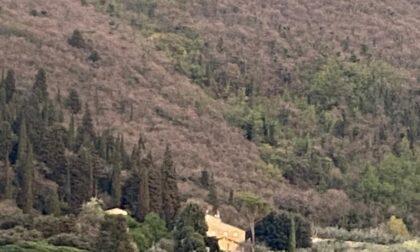 Settantenne cade nel bosco in zona casa Bastone: intervento del Pegaso