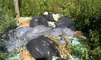 Trovati 30 sacchi abbandonati contenenti lana di pecora