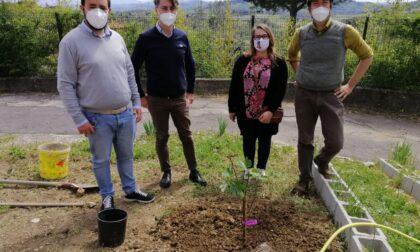 Alla scuola Pontormo piantato… un fico