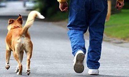 Guardie zoofile Enpa al lavoro a Firenze: sanzionati proprietari di cani senza guinzaglio