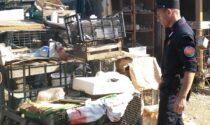 Sesto Fiorentino, denunciato dai carabinieri per rifiuti e manufatti fatiscenti in area occupata abusivamente