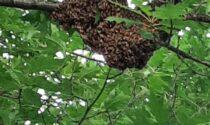 Sciame d'api al giardino di via Rodari, interviene la polizia municipale con un apicoltore (vedi le foto)